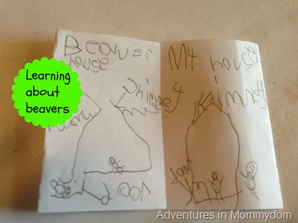 Beaver activities for young kids