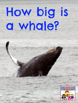 How big is a whale