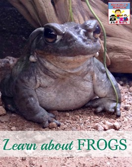 Learn about frogs