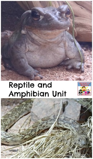 Reptile and Amphibian unit
