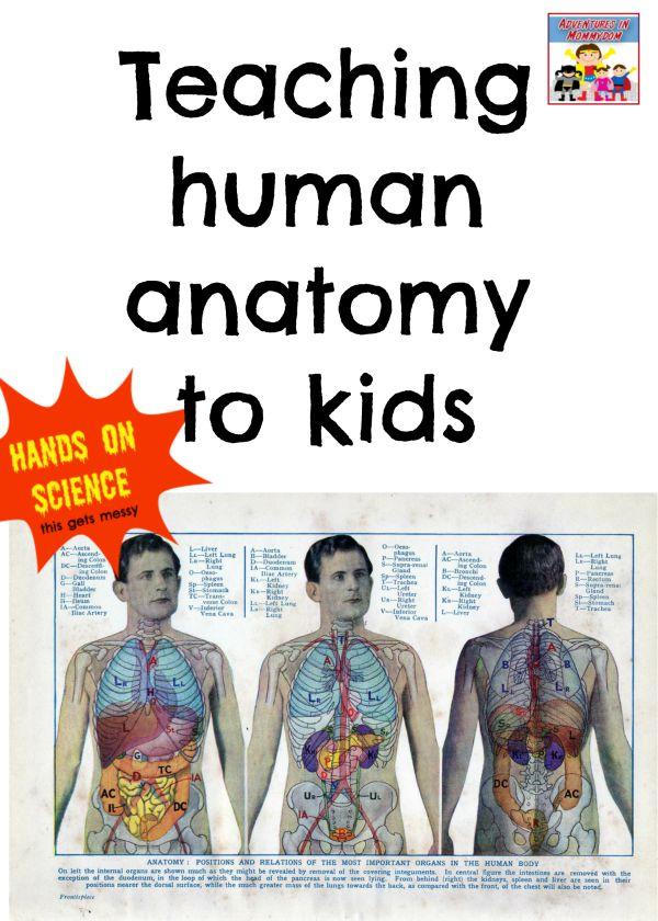 Teaching human anatomy to kids
