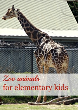 Zoo animals for elementary kids