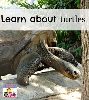 learn about turtles