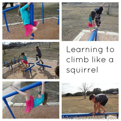 learning about a squirrel