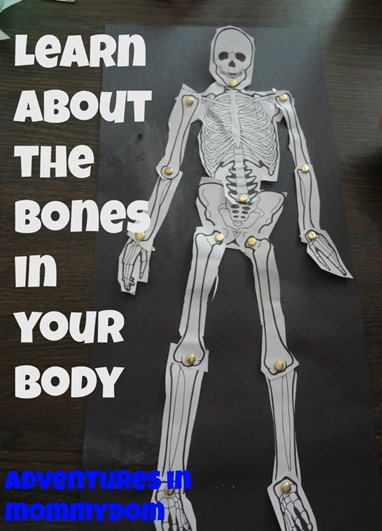 learning about the bones in your body