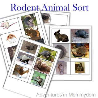 Rodent animal sort