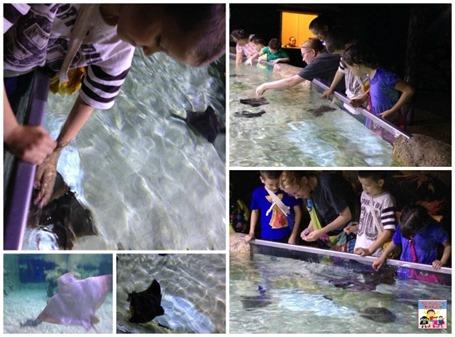Austin Aquarium manta ray tank