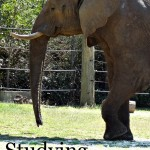 elephant unit study