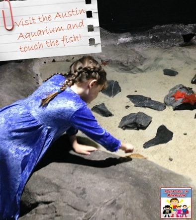 Visit the Austin Aquarium and touch the fish