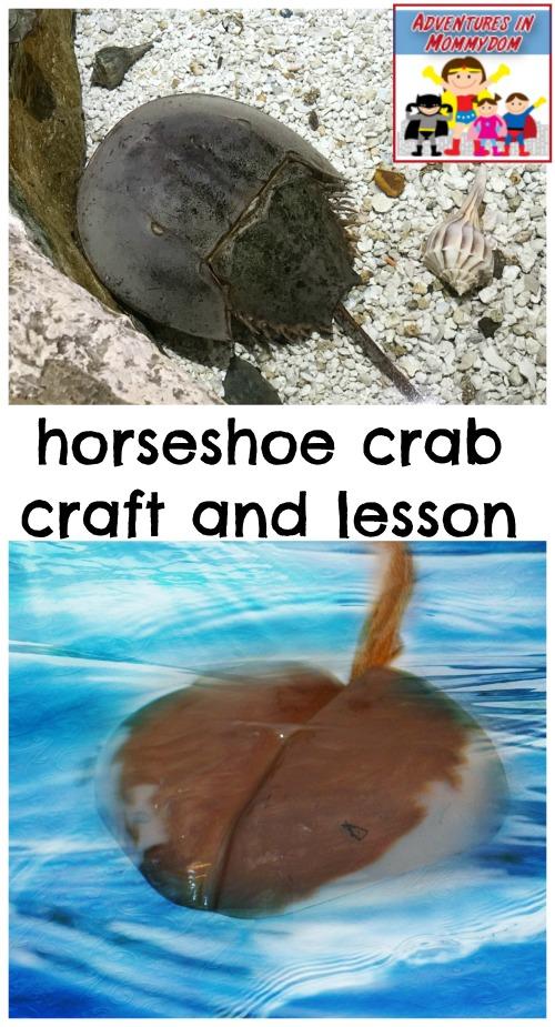 horseshoe crab craft and lesson