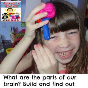 play dough brain model for elementary